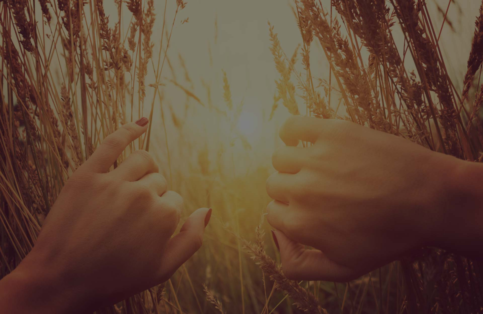 close-up of woman's hands peeking through stalks of wheat, looking into sunset